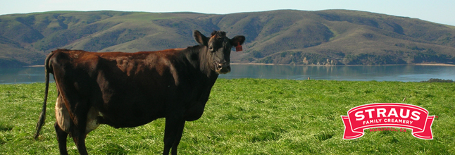 strauscow
